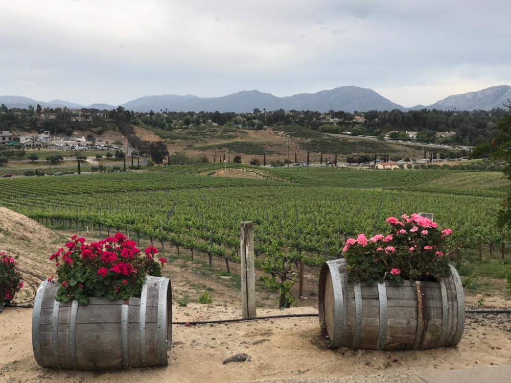 Callaway Winery